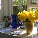 daffodils-on-a-sundrenched-windowsill-1155216-m