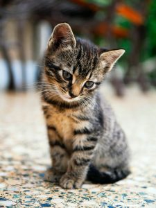 kotek mały